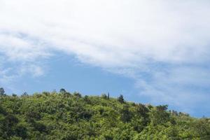 foresta sulle montagne