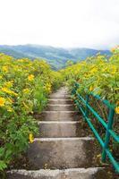 scale sul campo di fiori gialli