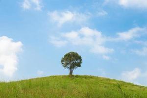 albero sulla collina foto