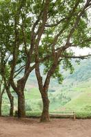 panchina sotto l'albero