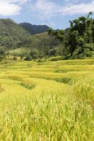fattoria di riso sulla montagna in thailandia