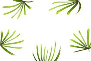 cornice di foglie di palma foto