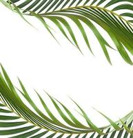 cornice foglia tropicale su bianco foto