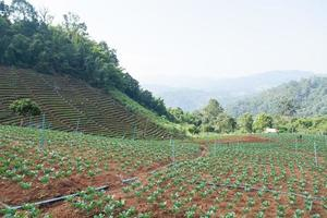 zona agricola in montagna foto