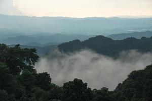 foresta coperta di nebbia in thailandia