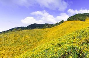 paesaggio in thailandia con fiori gialli