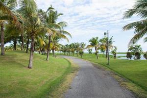 strada nel parco foto