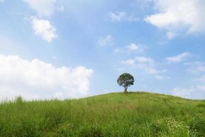 unico albero su una collina foto