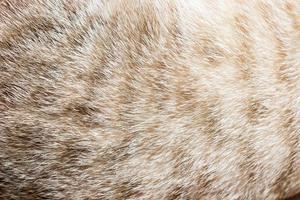 primo piano di pelliccia di gatto per texture o sfondo