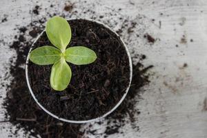 primo piano di giovane germoglio in crescita
