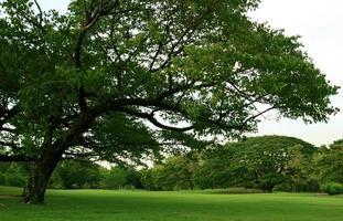grandi alberi verdi