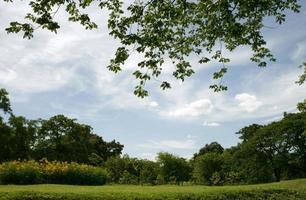 alberi contro il cielo blu