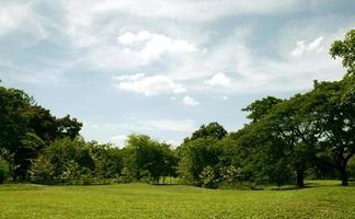 erba verde e alberi