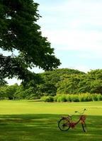 bici in giardino