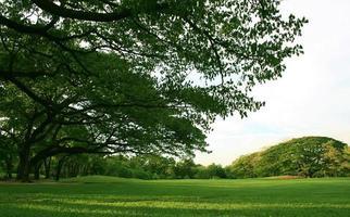 prato verde lussureggiante e alberi