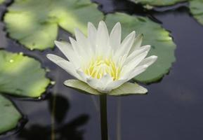 fiore bianco e giallo