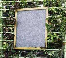 segno circondato da piante foto