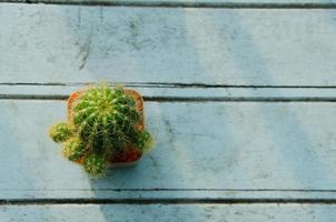 cactus sopra la vista foto