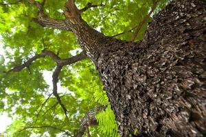 sotto l'albero foto