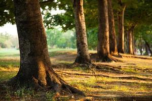 alberi in fila foto
