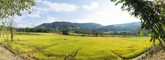 campo di riso e montagna