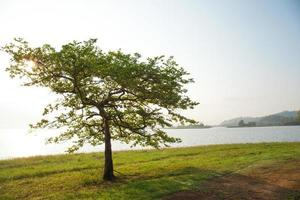 alberi in riva al lago