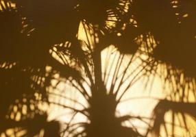 palma shadowa foto