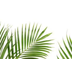 foglie di palma con copia spazio foto