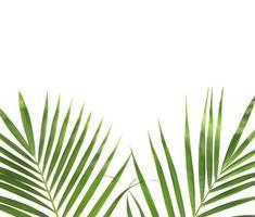 foglie verdi e copia spazio su bianco foto