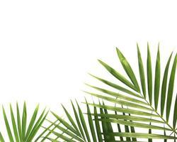 foglie tropicali e copia spazio foto