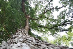 grande albero con foglie verdi foto