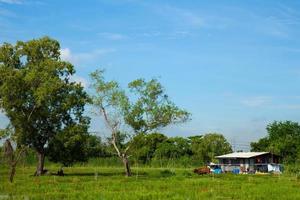 cottage su un prato in thailandia