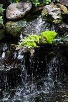 piccola cascata nella foresta