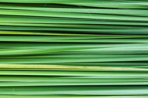 sfondo delle foglie di erba foto