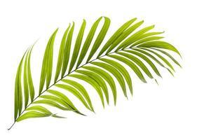 singola foglia di palma verde su sfondo bianco foto