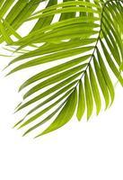 gruppo di foglie tropicali foto