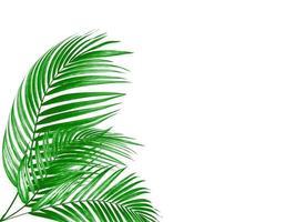 tre foglie di palma foto