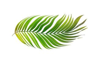 foglia verde tropicale foto
