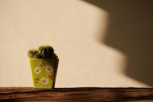 cactus in vaso foto