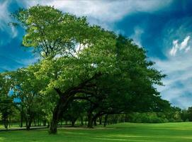alberi e cielo blu