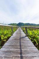 sentiero in legno nella palude