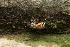 ape su una pietra foto