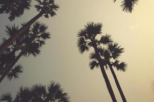 silhouette di palme foto