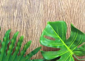 due foglie verdi su legno foto