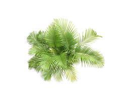 gruppo di foglie di palma su bianco
