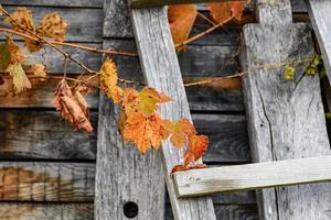 foglie di autunno su legno foto