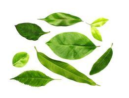 raccolta di foglie verdi isolato