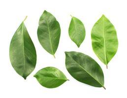gruppo di foglie verdi isolato su bianco