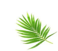 vivace ramo verde brillante