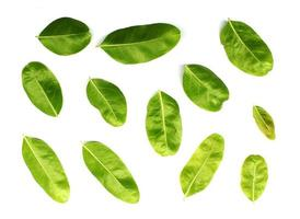 raccolta foglie tropicali